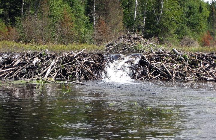 Unblock the Dams