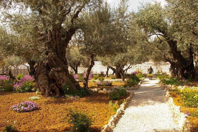 garden-of-gethsemene-jerusalem-daniel-blatt